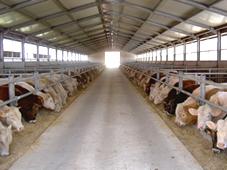 Использование увлажнителей воздуха в кондитерской, текстильной промышленности, в производстве пластиков, типографии, животноводстве, пищеперерабатывающей промышленности и в аграрном секторе