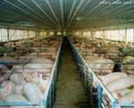 Применение увлажителей воздуха в птицеводческих, животноводческих комплексах, грибницы, теплицы и т.д. в Украине - ООО